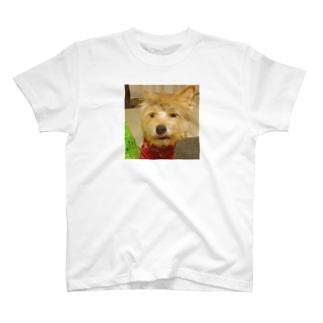 ぼっけとした めんこさん T-Shirt