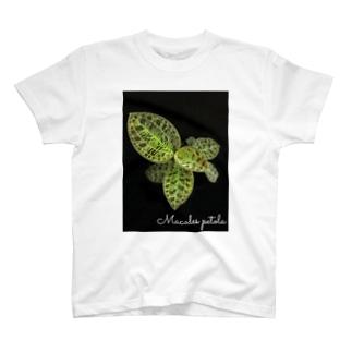 Macodes petola T-shirts