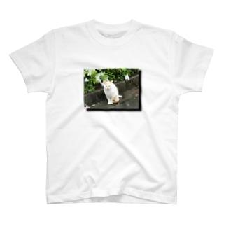 雨とのらねこと花 T-shirts