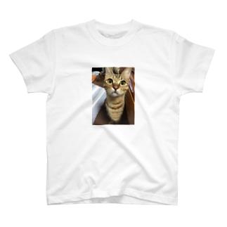 こけしとら T-shirts
