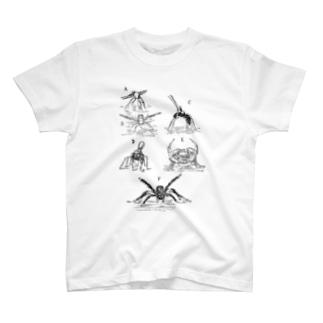 さまざまな異なるクモの舞踏 T-shirts