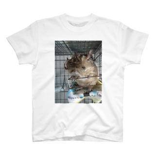 でぐーのそらちゃん T-shirts