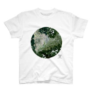 WEAR YOU AREの山梨県 甲府市 Tシャツ T-shirts