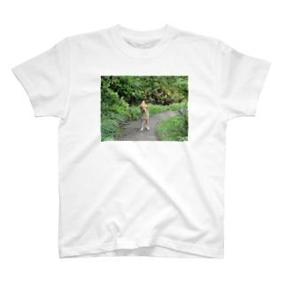 この犬探して T-shirts