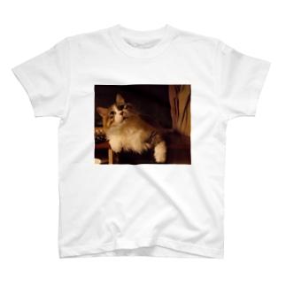 社長3。 T-shirts