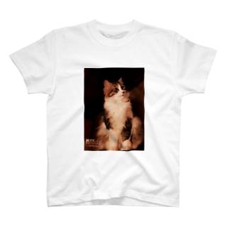 社長4。 T-shirts