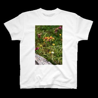ゆきうさぎ工房のなかよしギク T-shirts