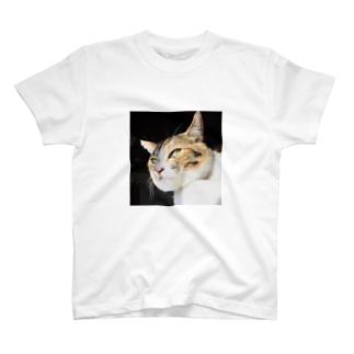 ネコグッズ 箱入り猫ニャー      Tシャツ