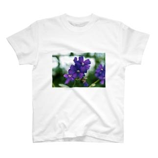 ヴァイオレットが咲いている T-shirts