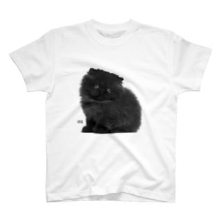 Pretty Little Kitty Cat T-shirts
