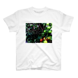 ZEN PROJECT T-shirts