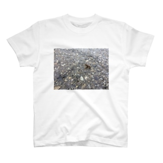 カエル T-shirts