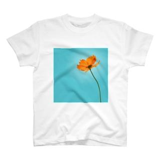 キバナコスモス T-shirts