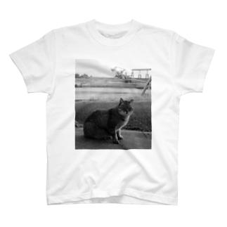 NAZOTOWNの池島の猫 T-shirts