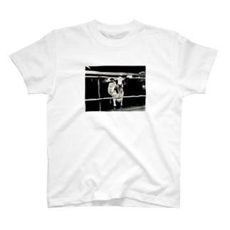 牛 T-shirts