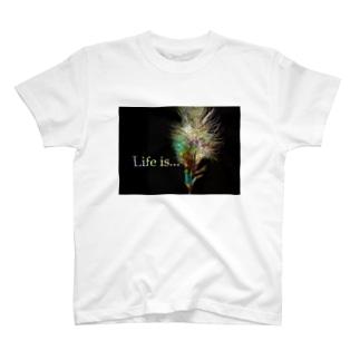 Shiney Feather T-shirts