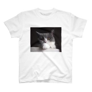 ハチワレねこ黒カブ T-shirts