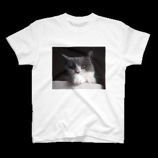 ぶりねこカブ屋のハチワレねこ黒カブ Tシャツ