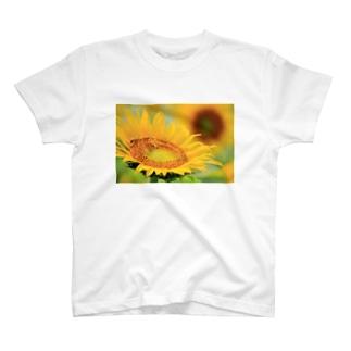 M.F.Photoのひまわり T-shirts