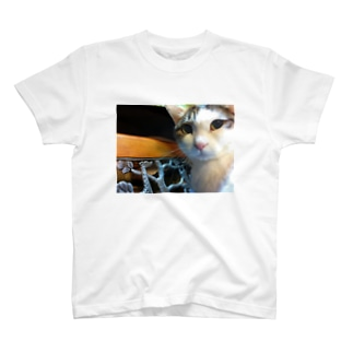 Cats Cool Face(CCF) T-shirts