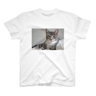 cat_20180712_7006' T-shirts