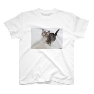 cat_20180515_2856' T-shirts