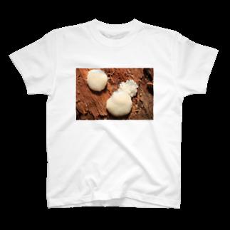 Aiko Nakanoの粘菌_ムラサキホコリ_20170823_8703 T-shirts