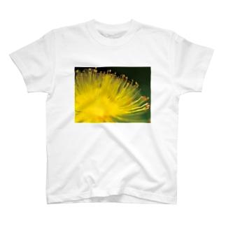 姫金糸梅02 T-shirts