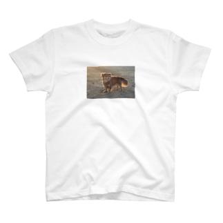 愛犬フォトプリント T-shirts