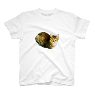ぬこ様(渋目線) T-shirts
