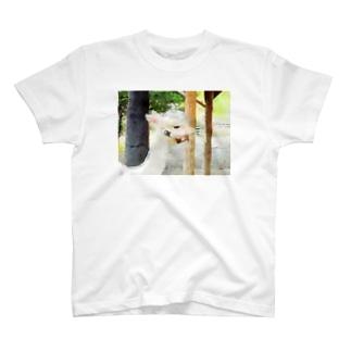 アルパカさん T-shirts
