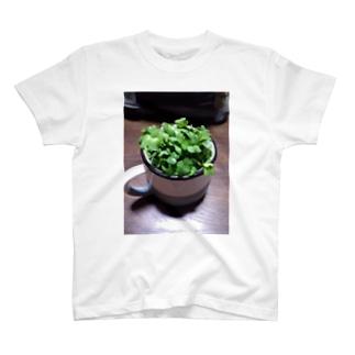 かいわれTEE T-shirts