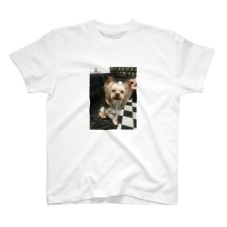 ヨーキー T-shirts