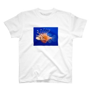 ミノカサゴ T-shirts