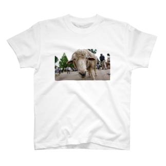 興味 T-shirts