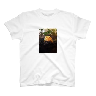 クランウェル T-shirts