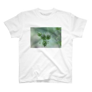 パクチーの実_20170627_5453 T-shirts