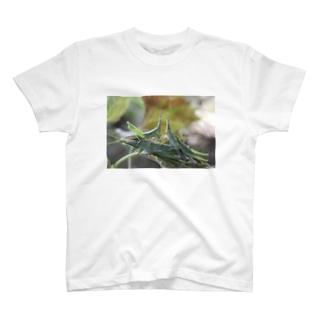 オンブバッタ_20171116_9539 T-shirts