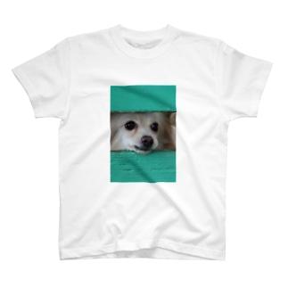 隙間から顔を出す犬 T-shirts