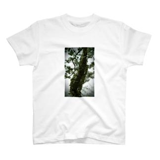 松と光(緑) T-shirts