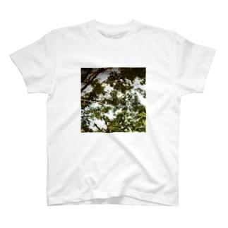木漏れ日 T-shirts