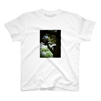 木を駆ける黒猫 T-shirts