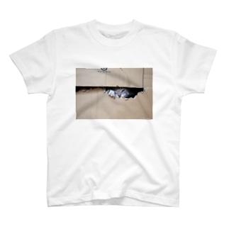 cat_20180529_3506' T-shirts