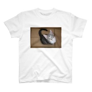 cat_20180603_3687' T-shirts