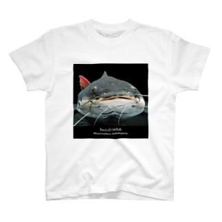 レッドテールキャットフィッシュ T-shirts