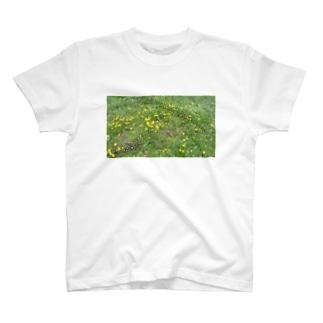 フォロロマーノのたんぽぽ T-shirts