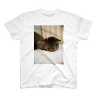家の猫 茶虎 T-shirts