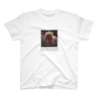 Won! T-shirts