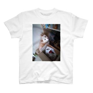 振り向き柴犬よしお T-shirts