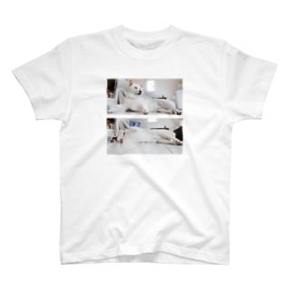 構って柴犬よしお T-shirts